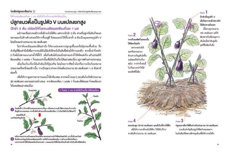 หนังสือ ปลูกพืชตามนิสัยผัก 03