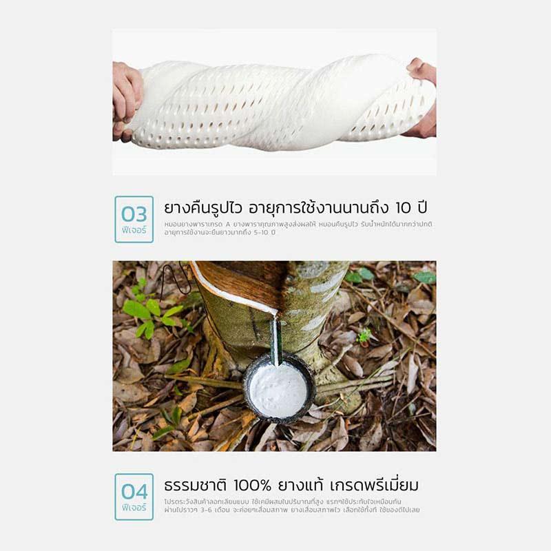 SiamLatex Curve Zen หมอนยางพารา
