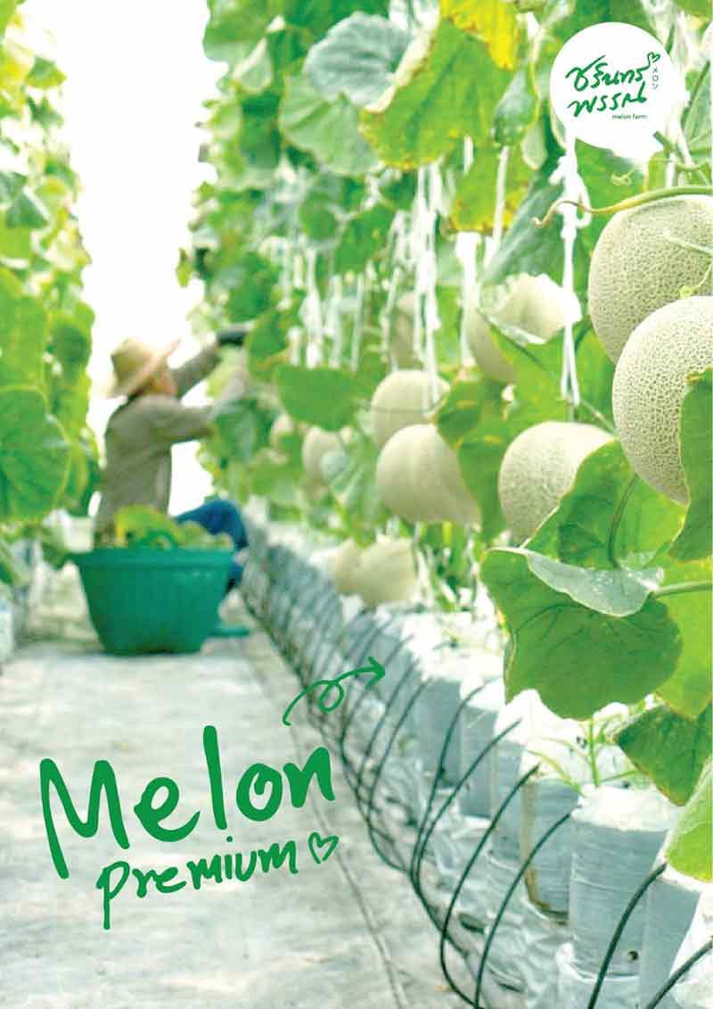 โครงการพิเศษ Melon