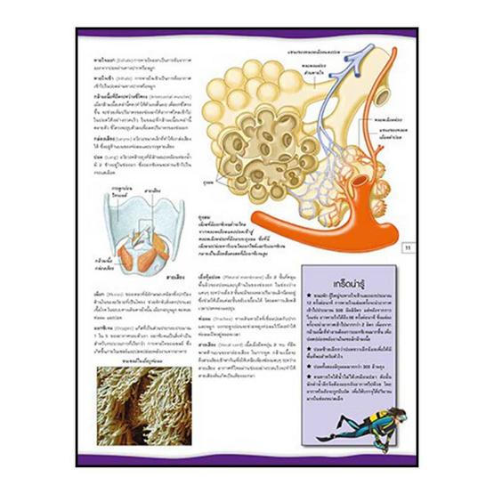 สารานุกรมประกอบภาพ ร่างกายมนุษย์ (ปกแข็ง)