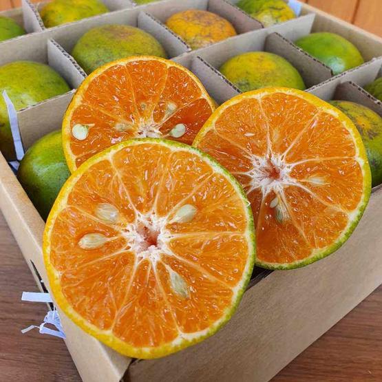 สวนร่มเกล้า ส้มกล่องมงคล 8 ลูก