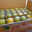 สวนร่มเกล้า ส้มสายน้ำผึ้ง 10 kg