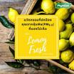 ไฟท์ฝุ่น สเปรย์ลดฝุ่น PM2.5 กลิ่น เลม่อน เฟรซ (Lemon Fresh) 300 มล.